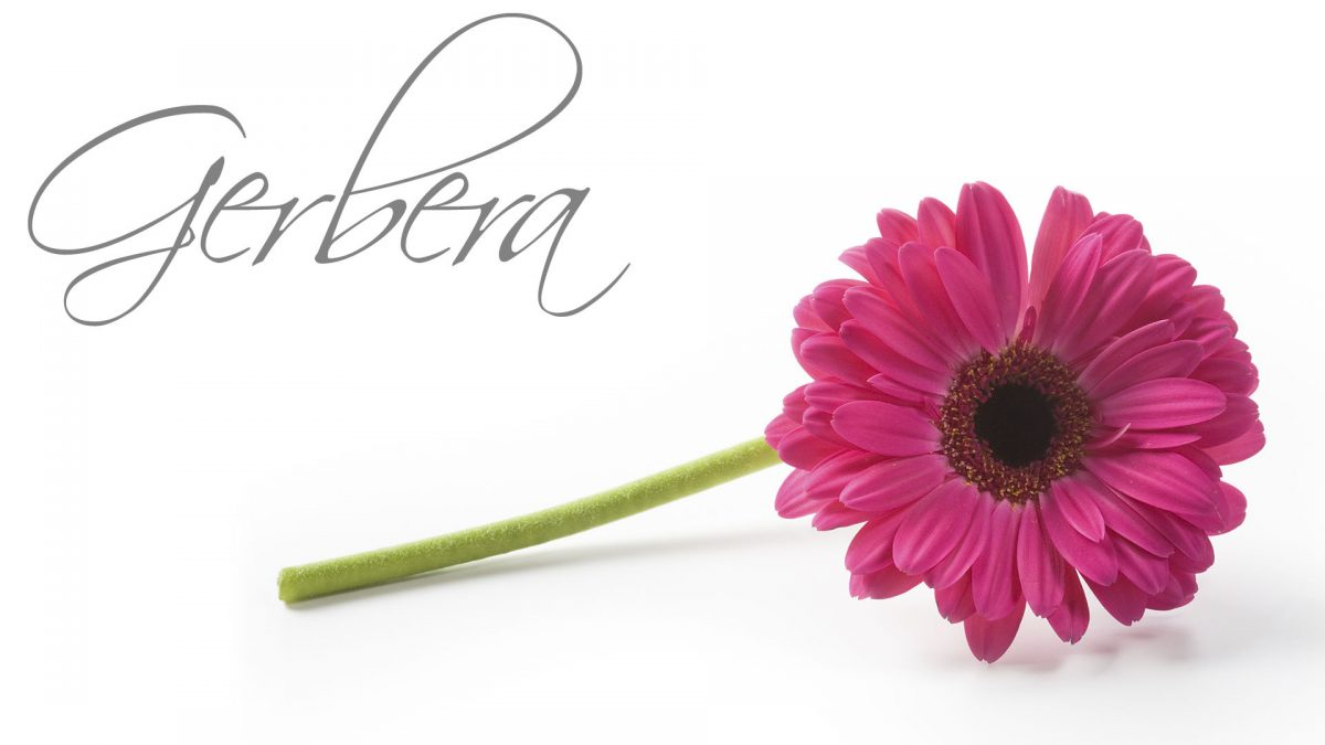 Gerbera Package Luxury Wedding Venues in Lancashire Packages Barton Grange Hotel