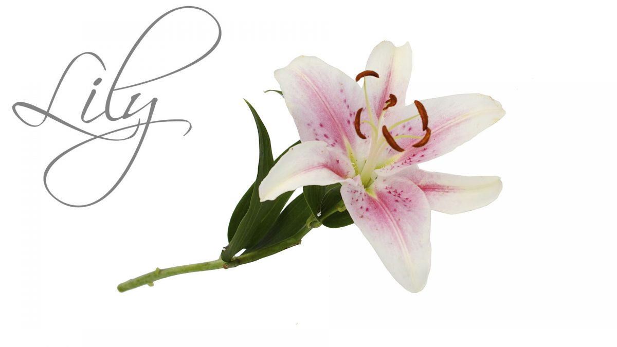 Lily Package Luxury Wedding Venues in Lancashire Packages Barton Grange Hotel