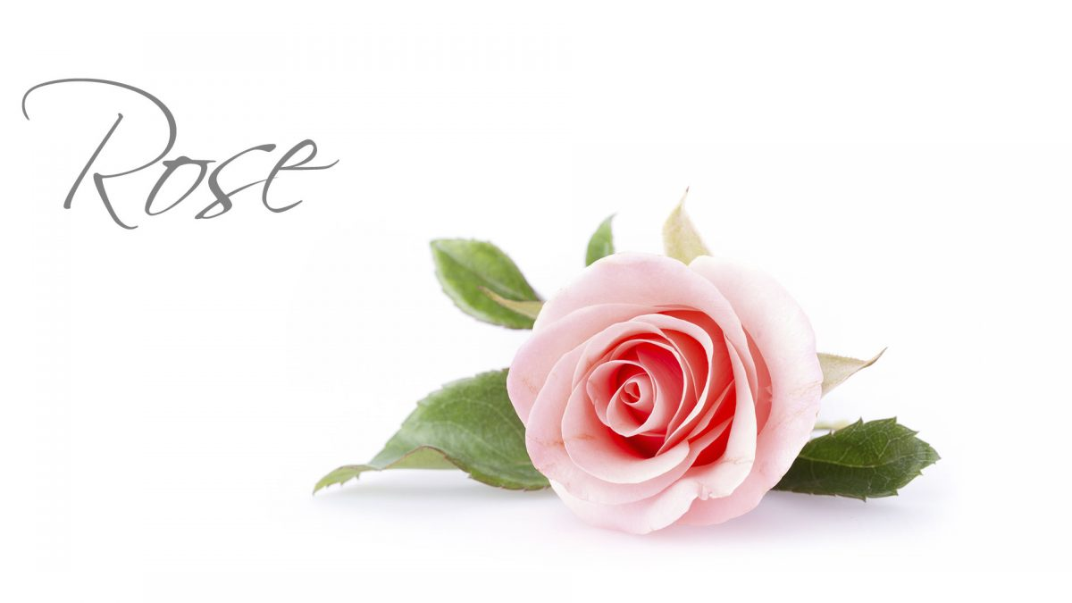 Rose Package Luxury Wedding Venues in Lancashire Packages Barton Grange Hotel